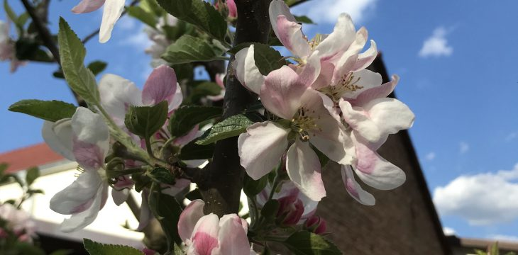 Frühling im LAUSL-Park
